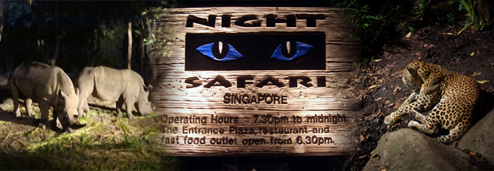 Night Safari Tour