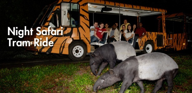 Singapore Night Safari Tours